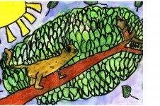 Romhányi Kitti: A leopárd vadászat közben